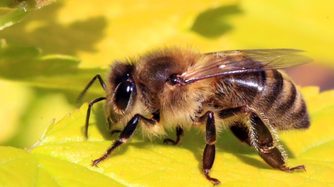 Top 10 lucruri despre albine